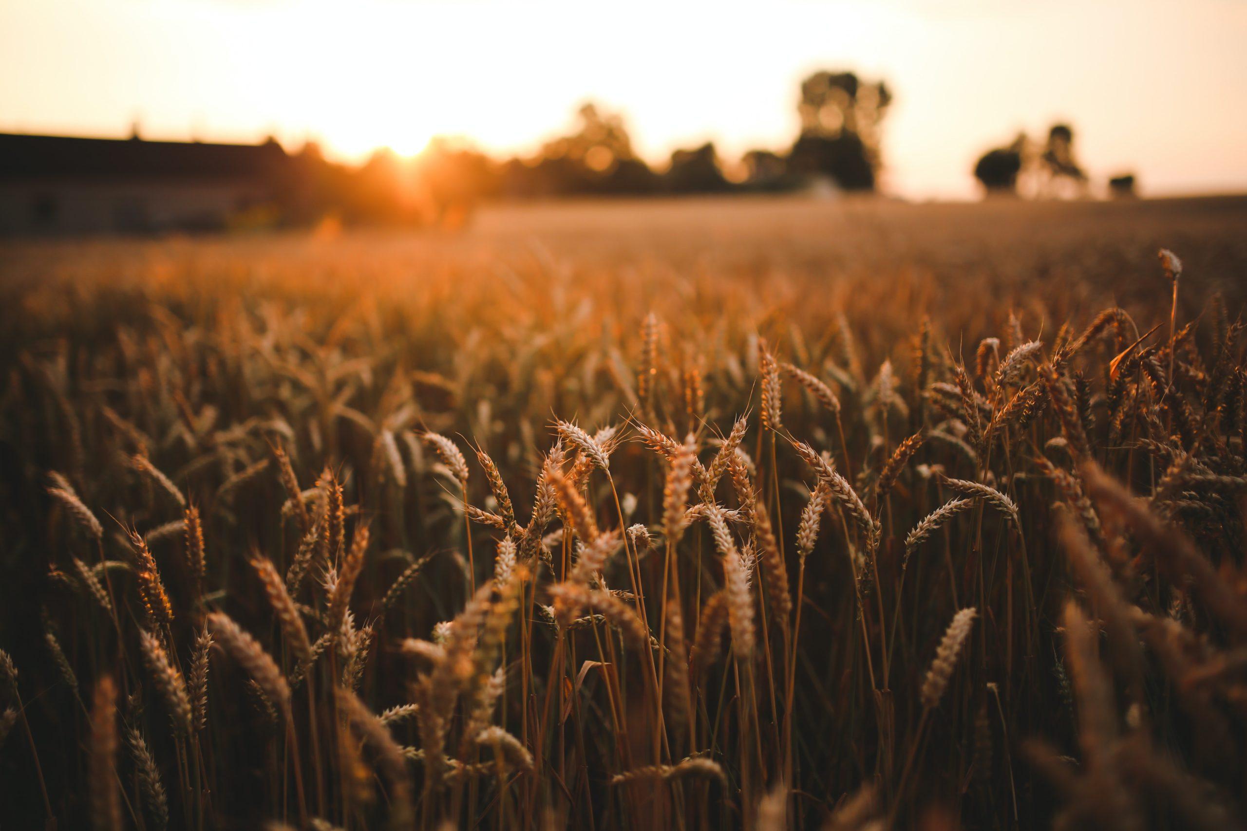 Biocraft поздравляет с Днем работника сельского хозяйства и перерабатывающей промышленности!