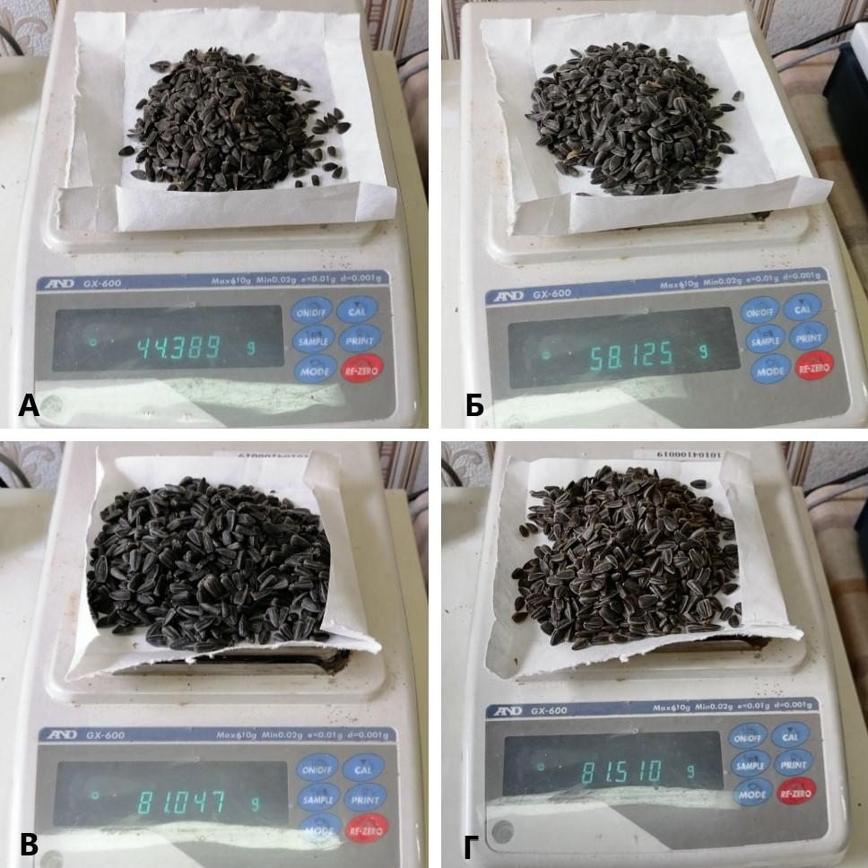uvelichenie-urozhajnosti-podsolnechnika-do-sta-procentov-2Имидж, слева направо: контроль, Микро-бионик 0,5 л/га, Микробионик 1,0 л/га, Микробионик 2 л/га, Краснодар, 2020.